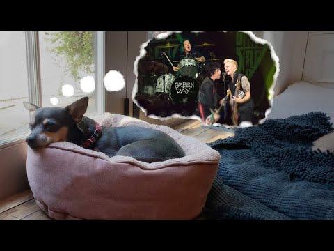 Green Day - Versión Dreaming de Blondie